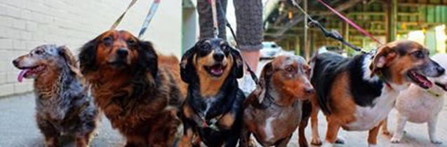 honden bruidspaar